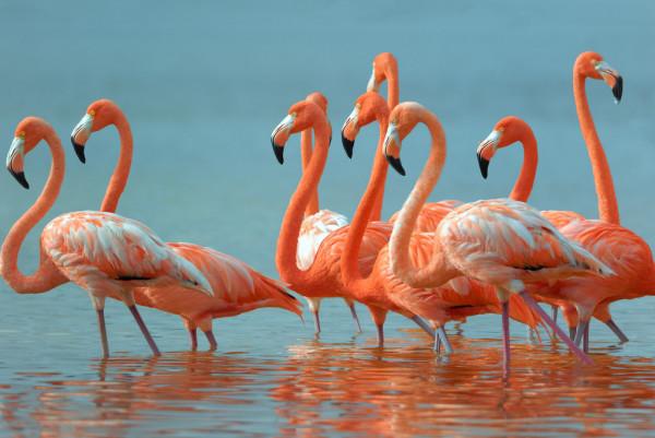 depositphotos_8339383-stock-photo-flamingos.jpg