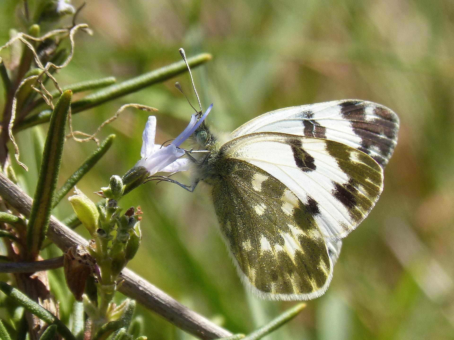 butterfly-976347_1920.jpg