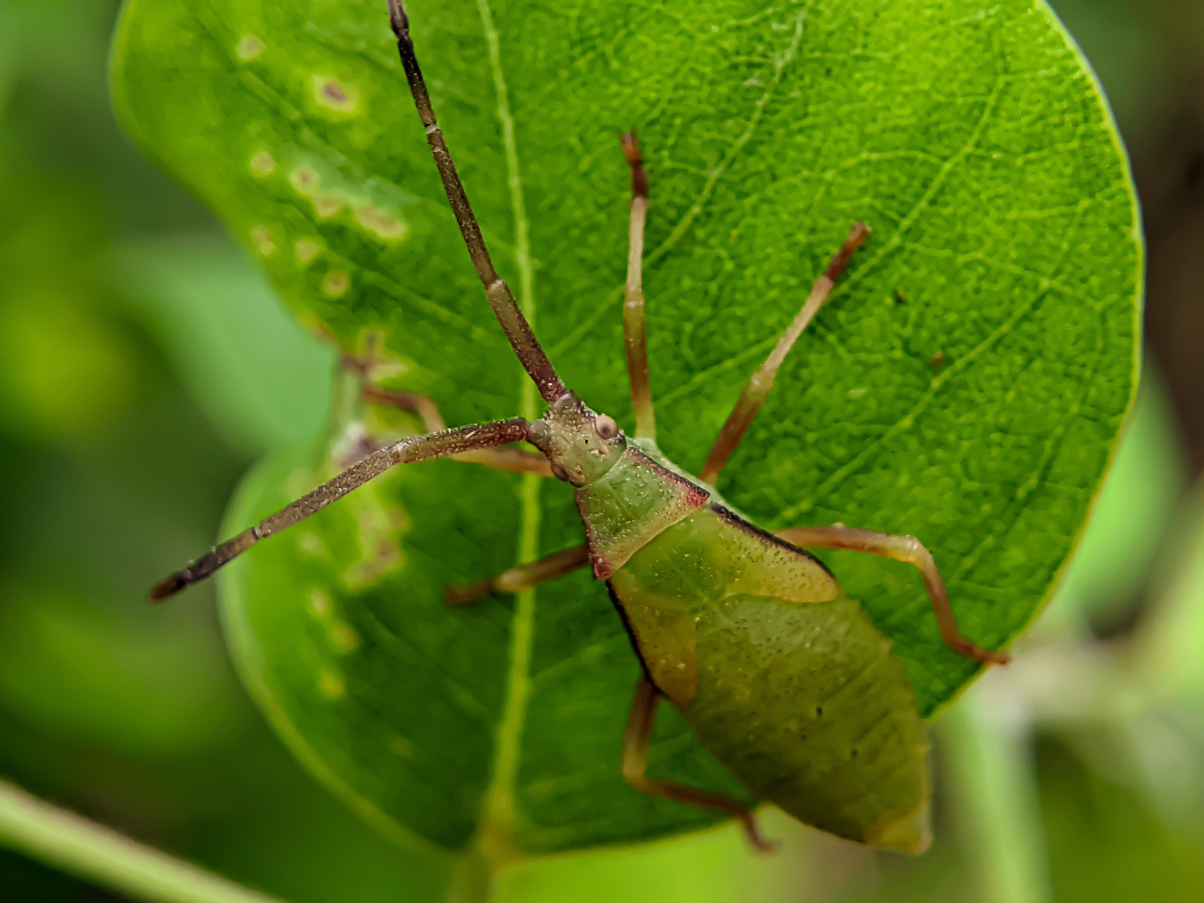 bug (7).jpg