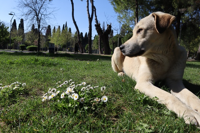 dog-dogs-daisy-dog-head-4575872.jpg