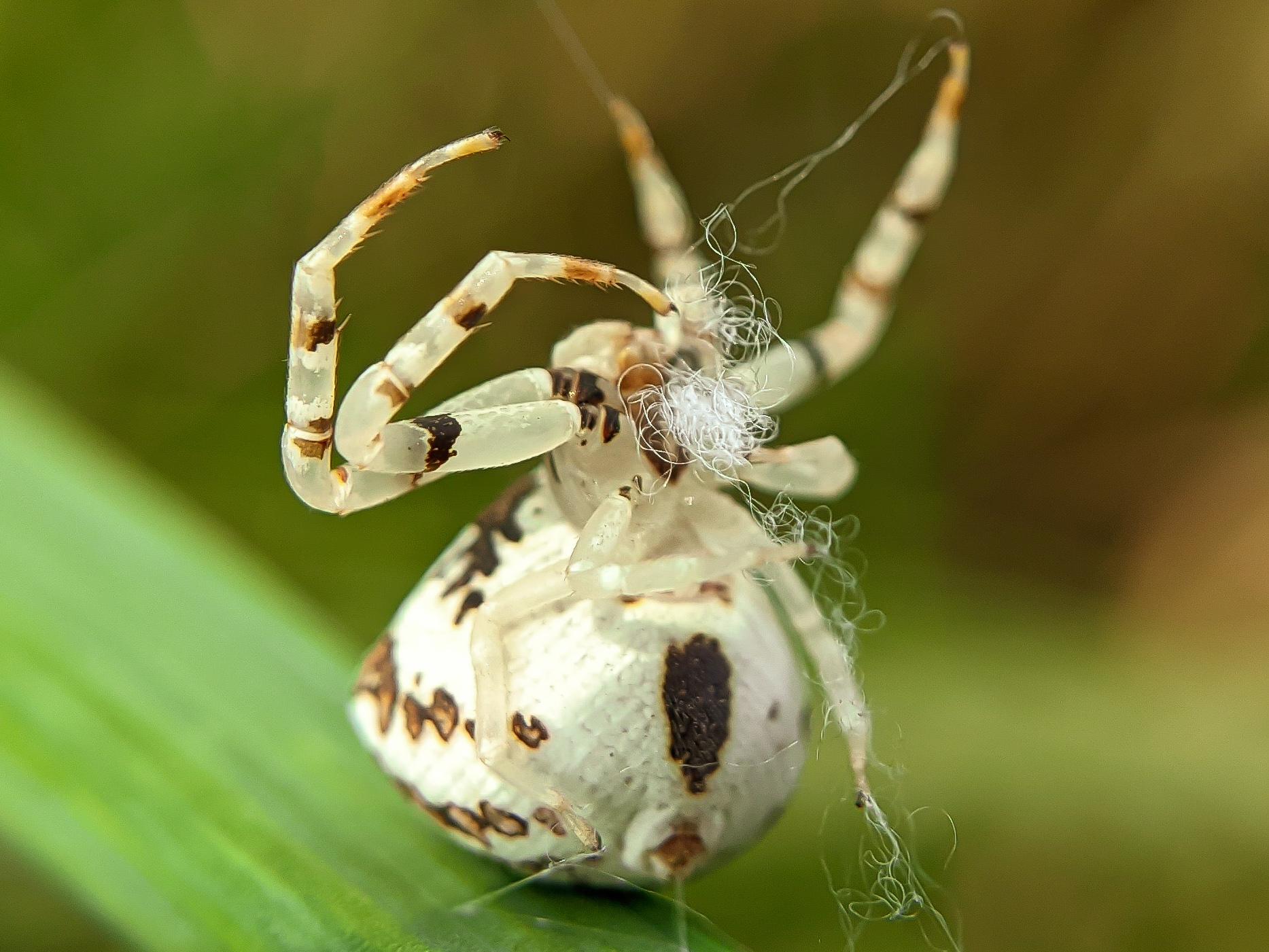 spider (20).jpg