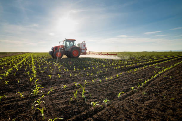 tractor-spraying-young-corn-with-pesticides-picture-id1224290959.jpg