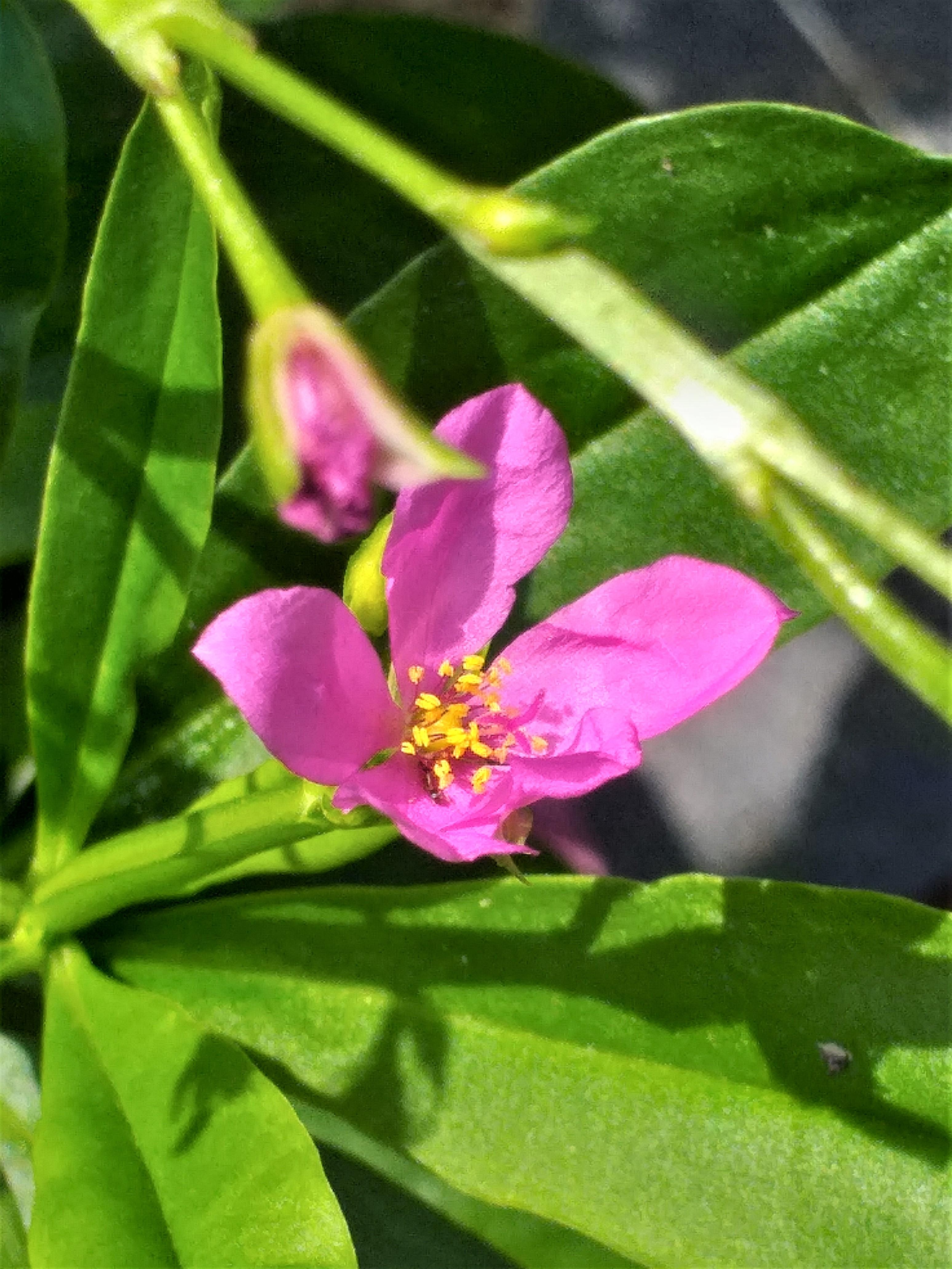 flower22.jpg
