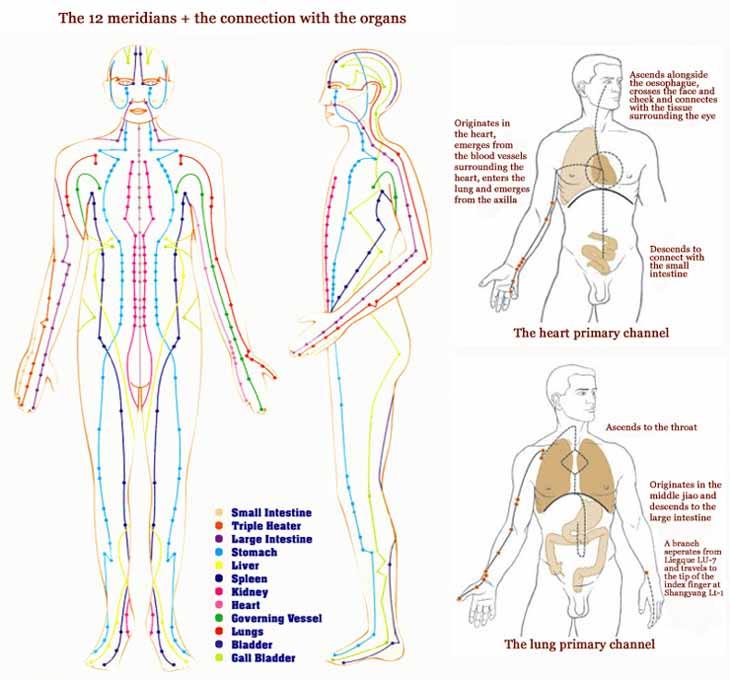 12-meridians-organs.jpg
