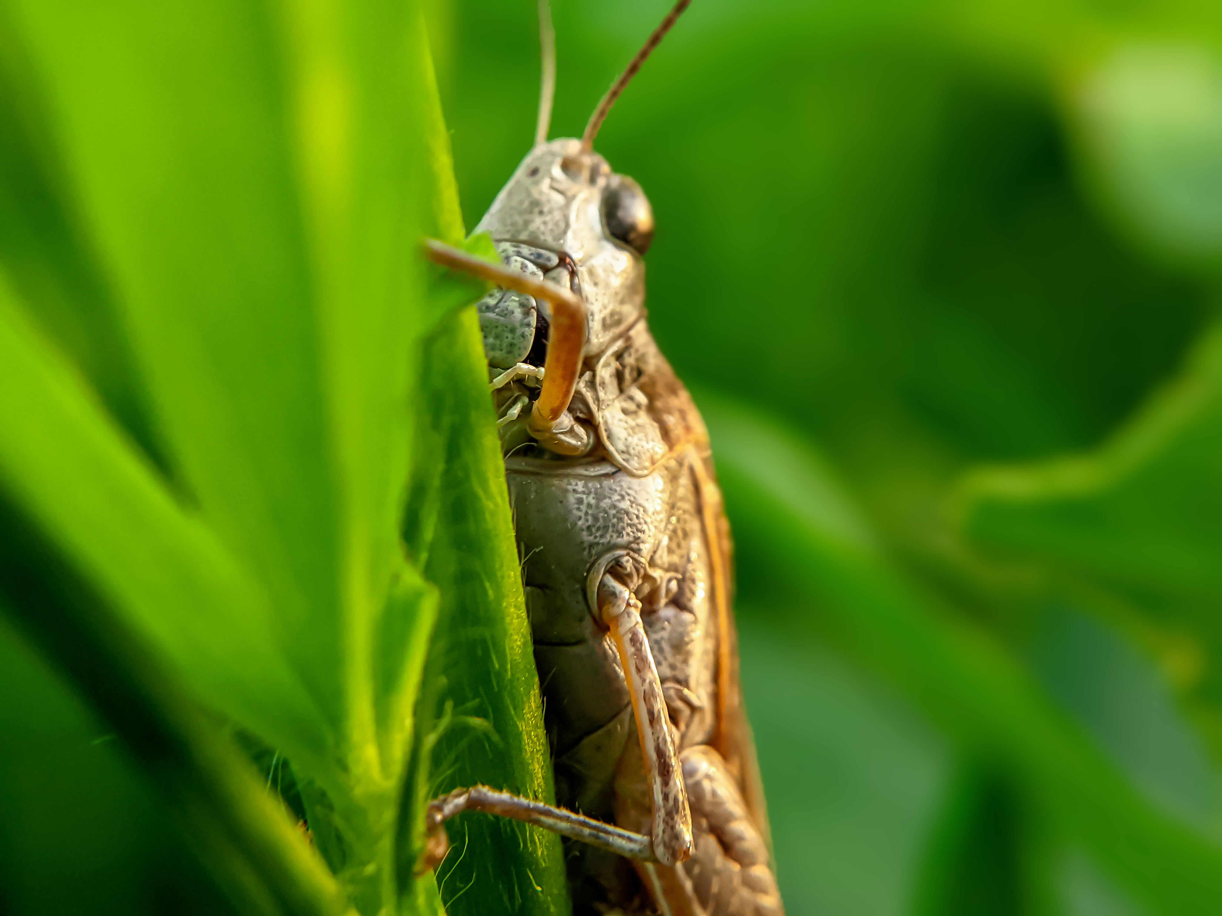 Grasshopper (6).jpg