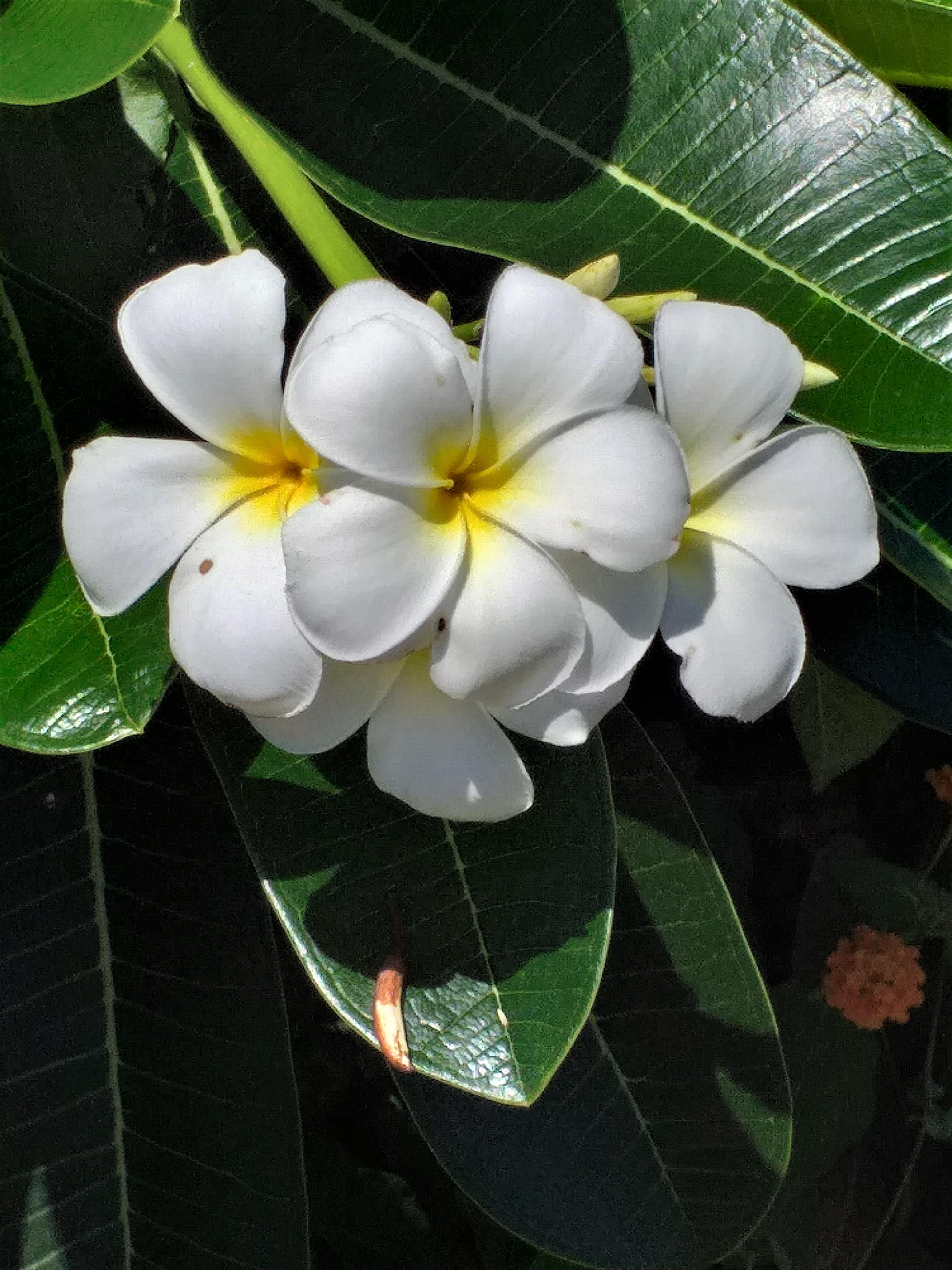 flower37.jpg