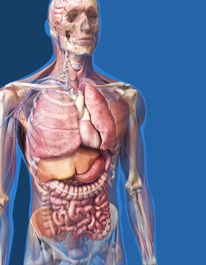 anatomy78.jpg