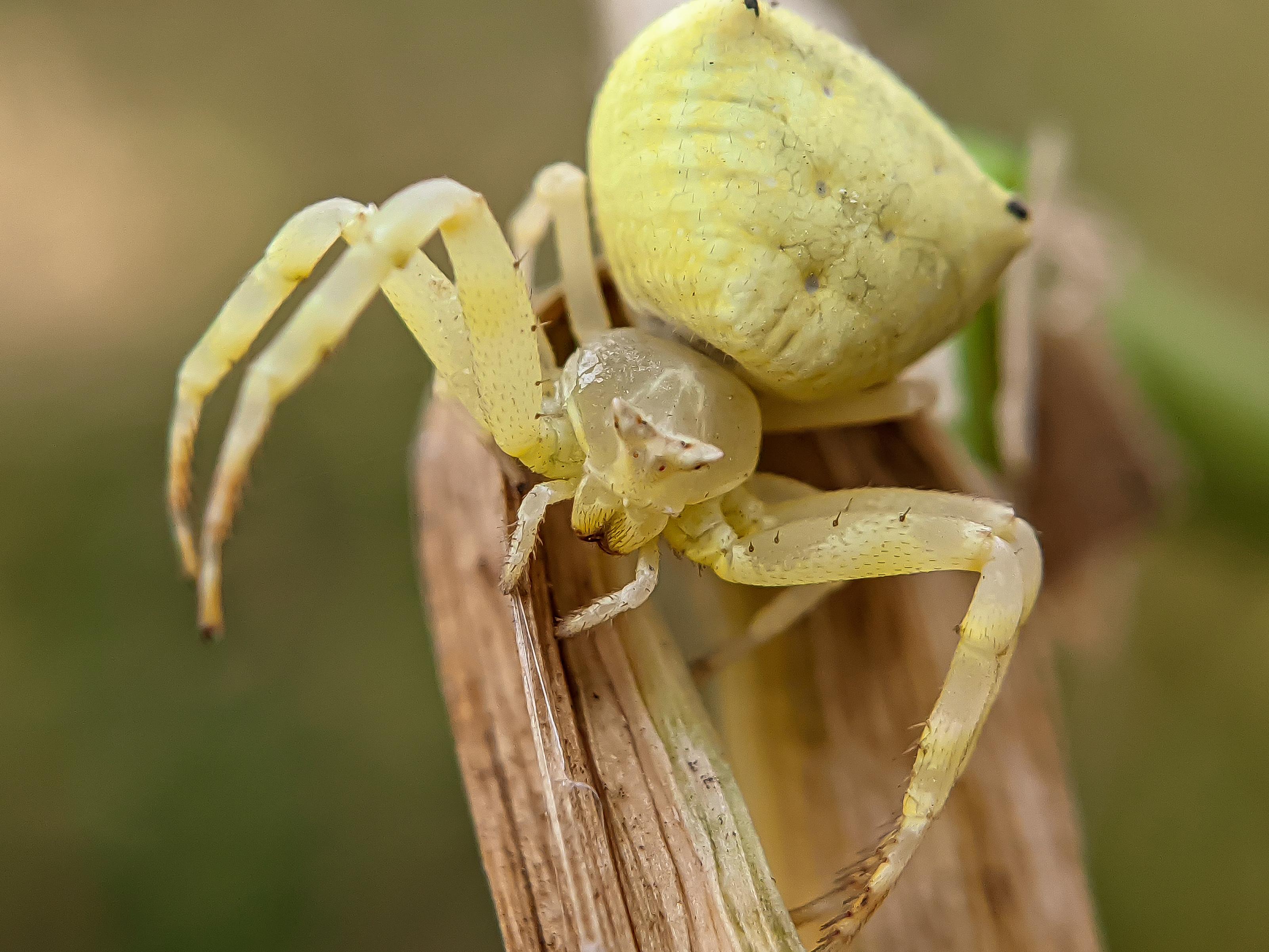 spider (10).jpg