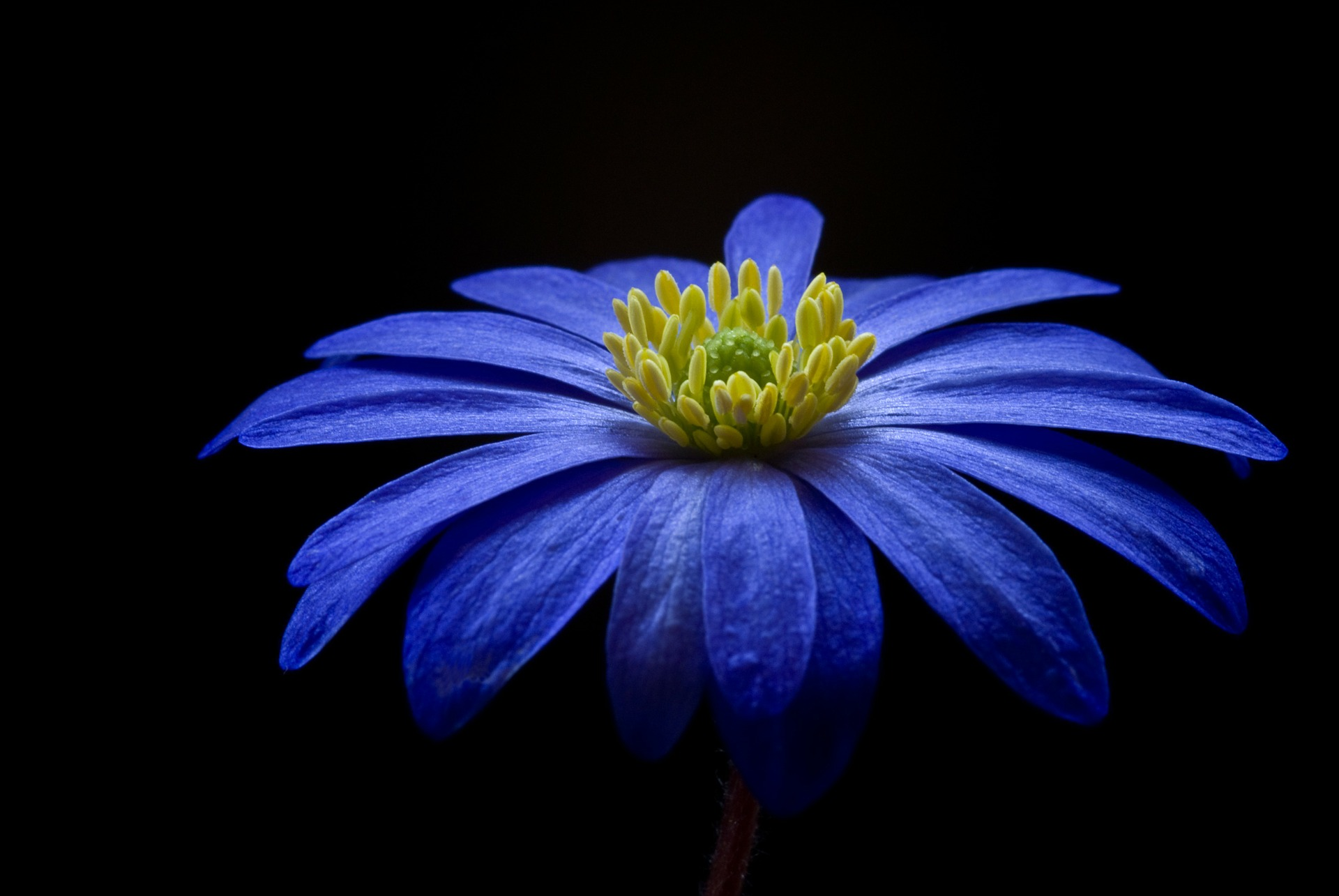 anemone-56414_1920.jpg