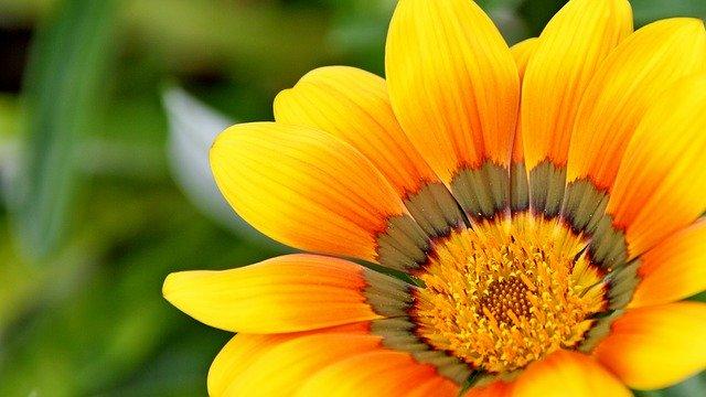 yellow-715540_640.jpg
