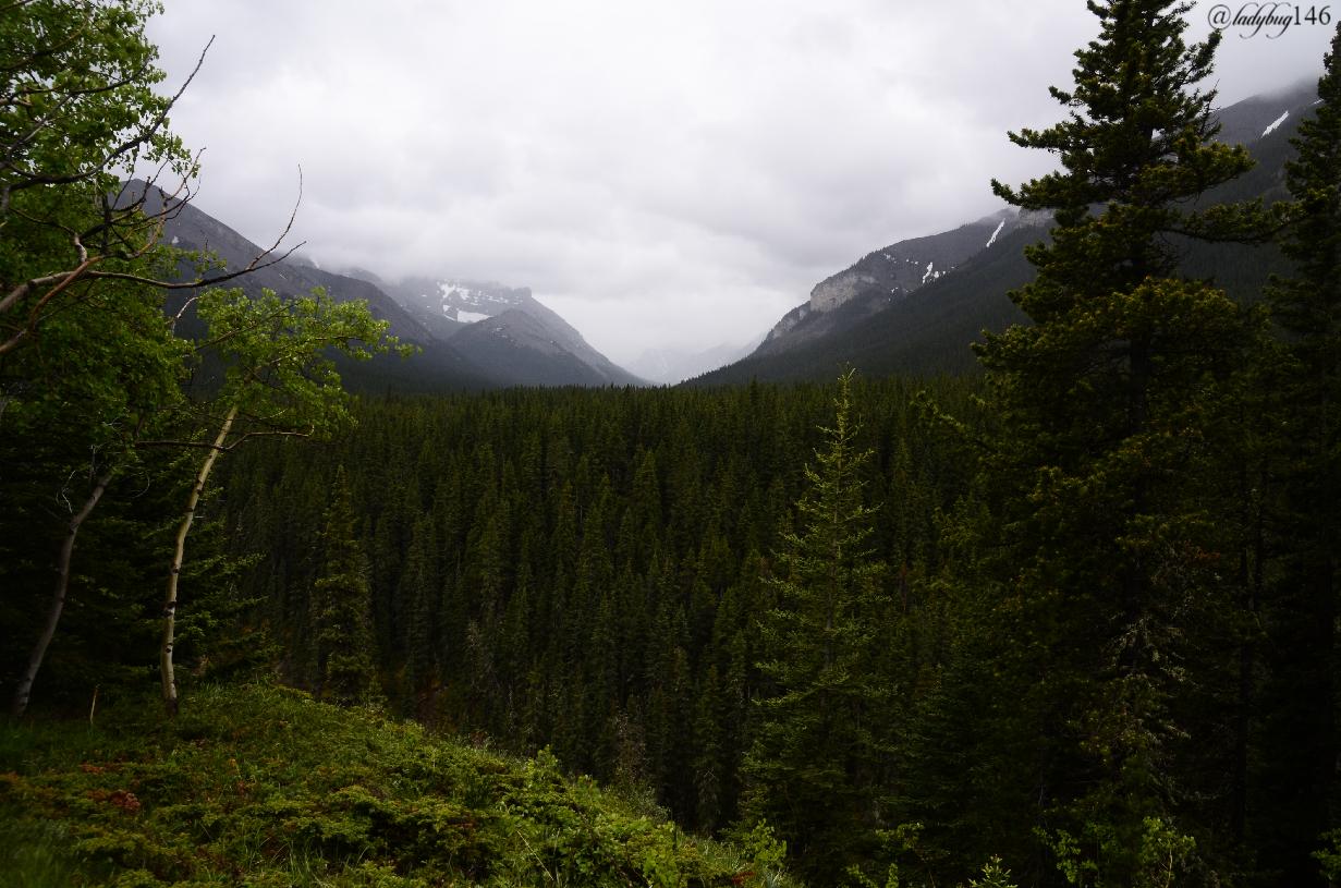 sheep valley provincial park (2).jpg