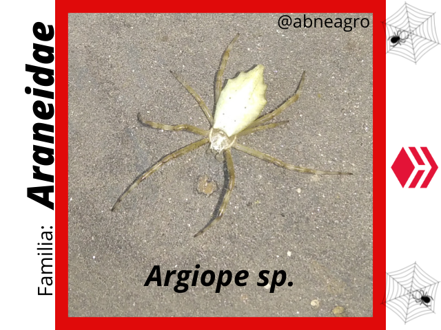 Araneidae(2).png