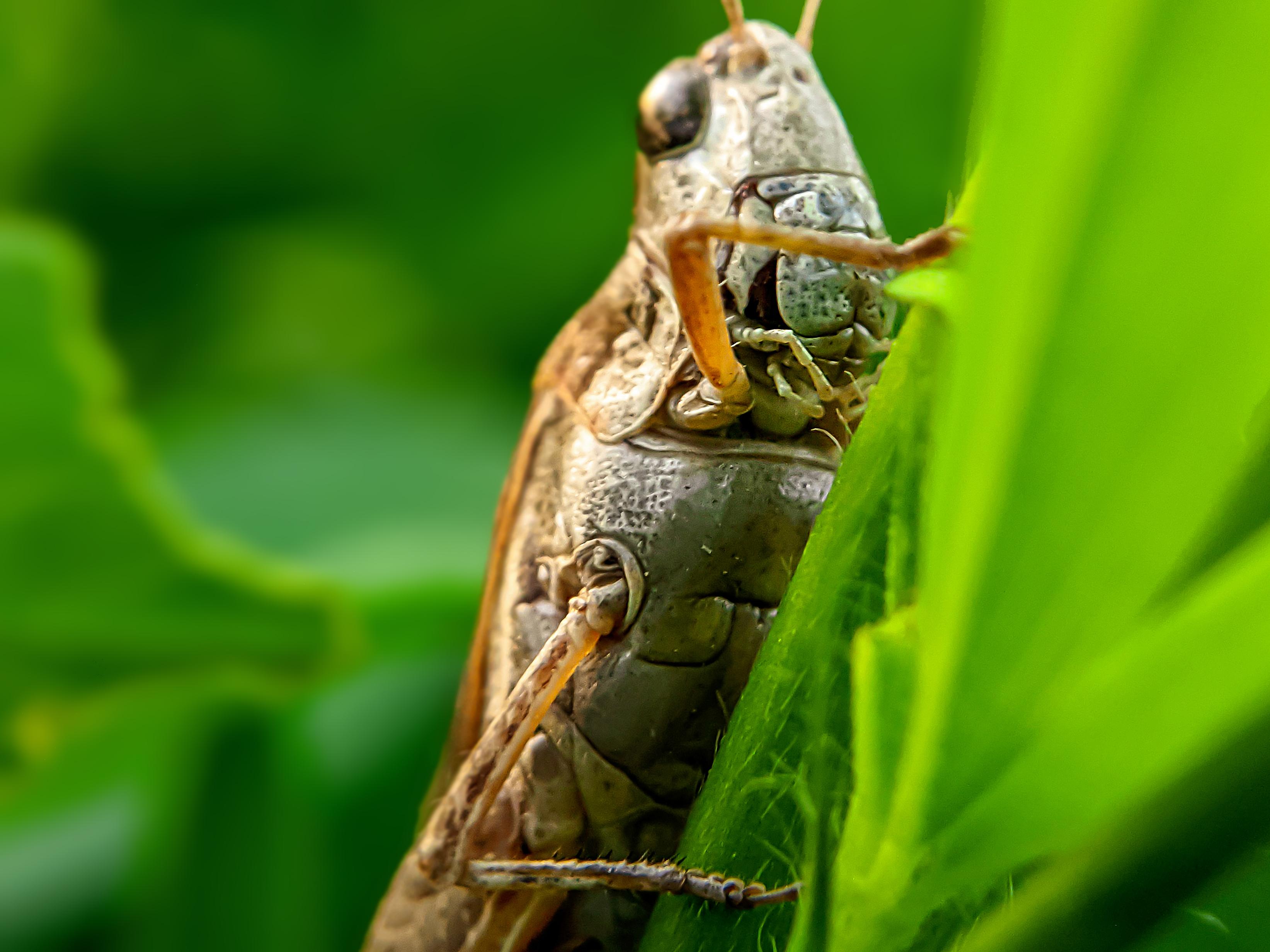 Grasshopper (7).jpg