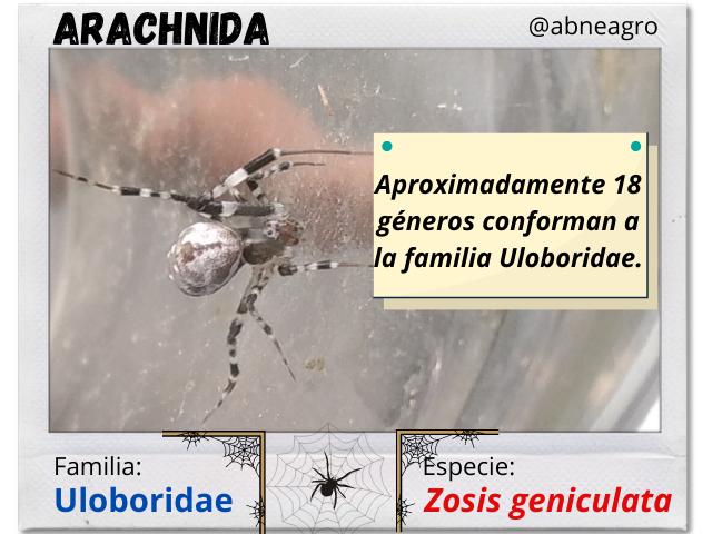 Arachnida(1).png