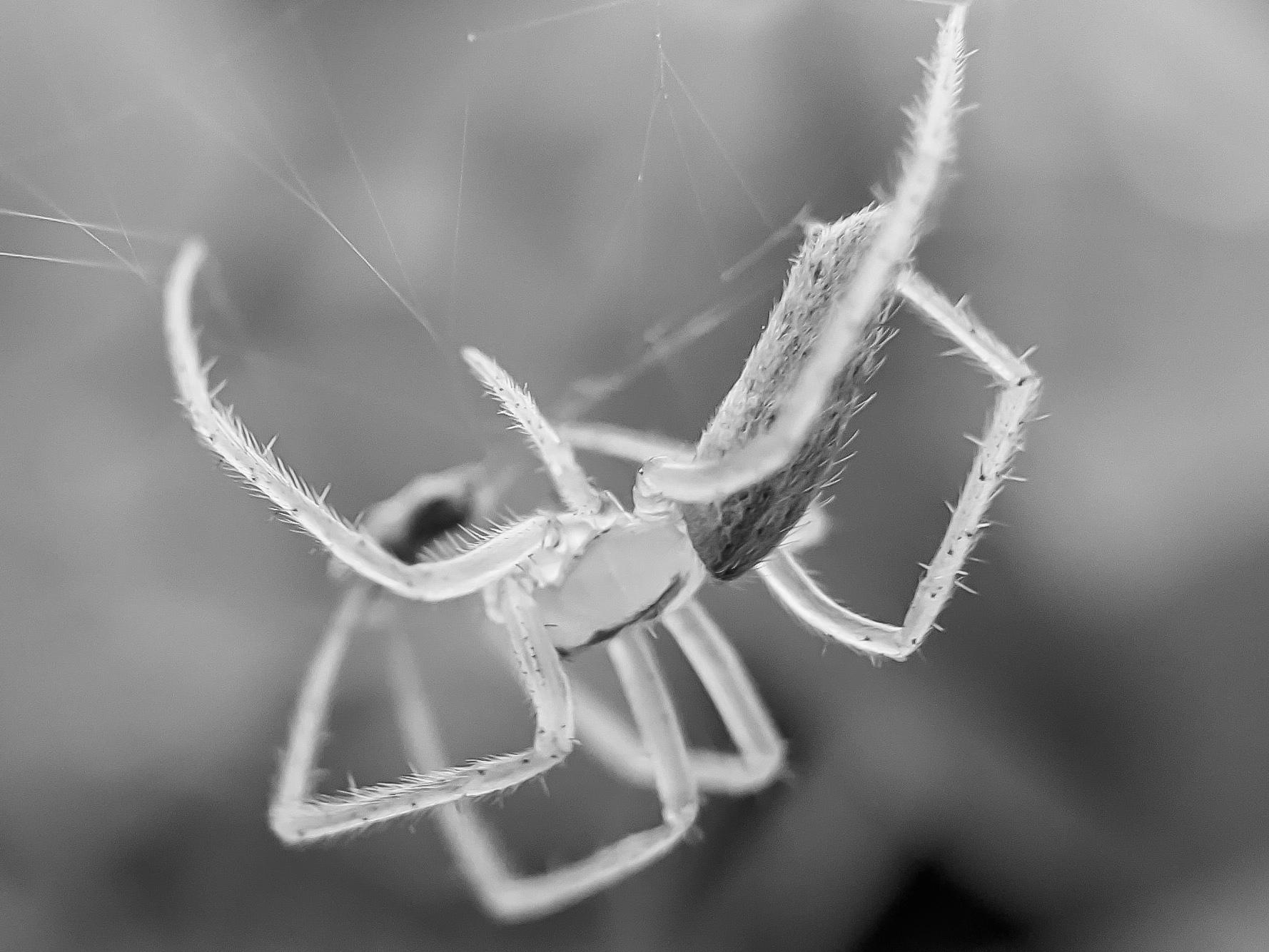 spider (5).jpg