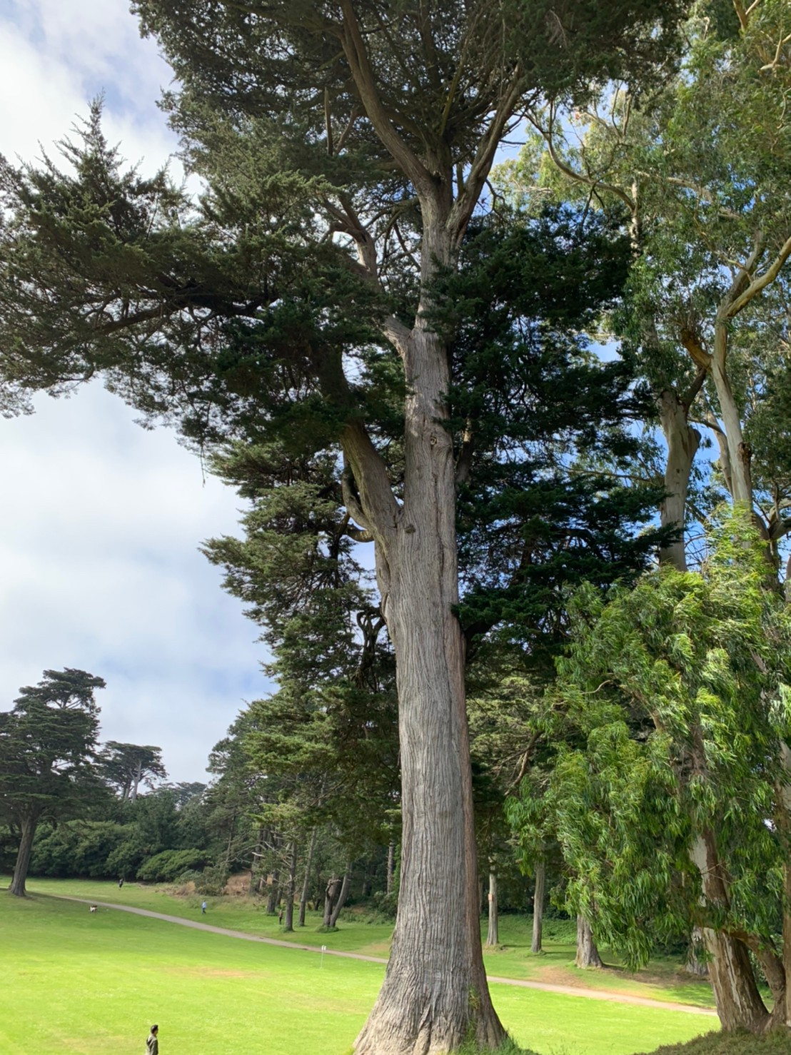 Golden Gate Park115.jpg