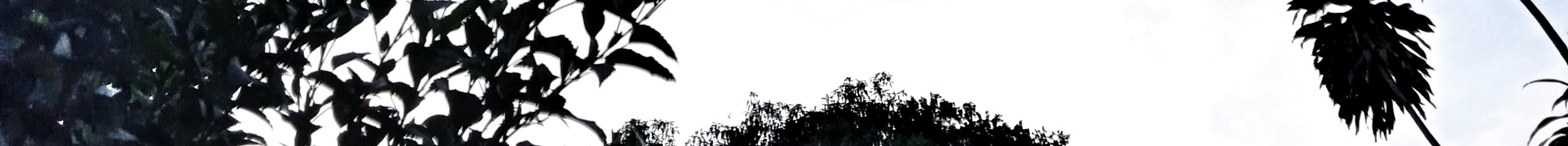 IMG_20210110_180216-02.jpeg