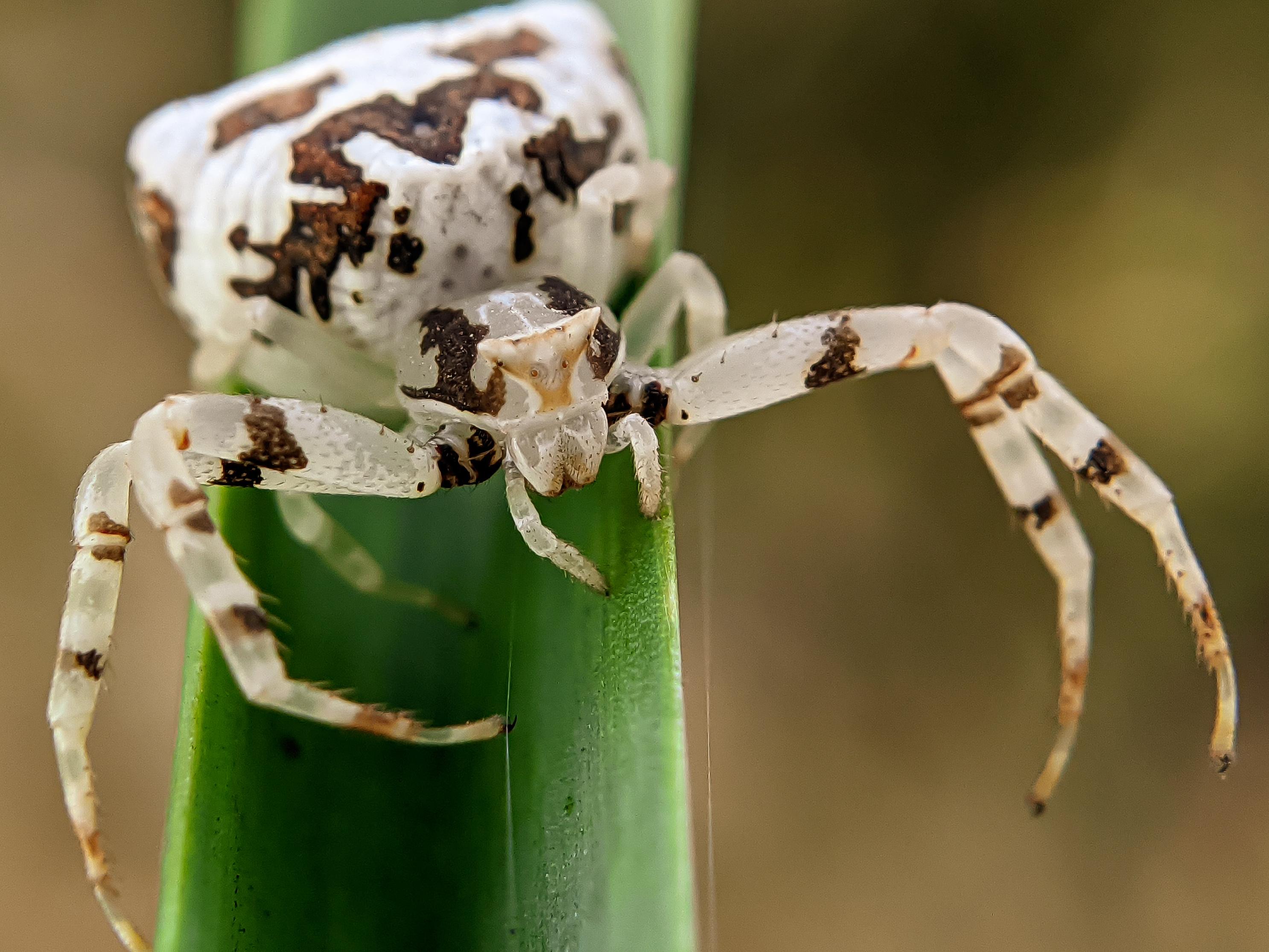 spider (12).jpg