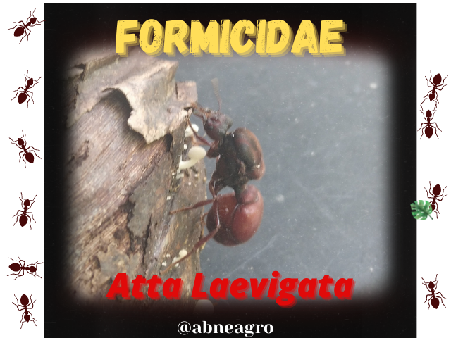 Formicidae(5).png