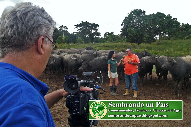 3 una experiencia con búfalos.jpg