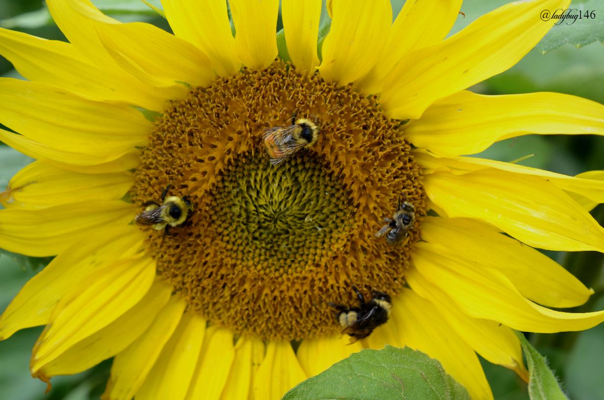 sunbee.jpg