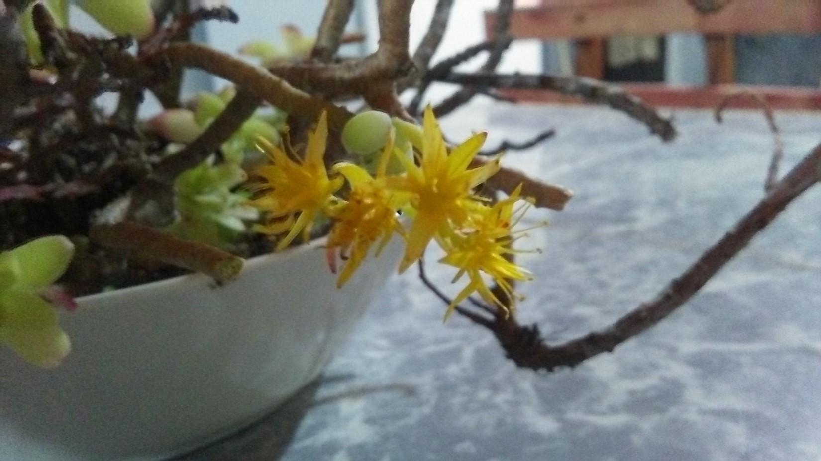 suculenta-hive-7.jpg