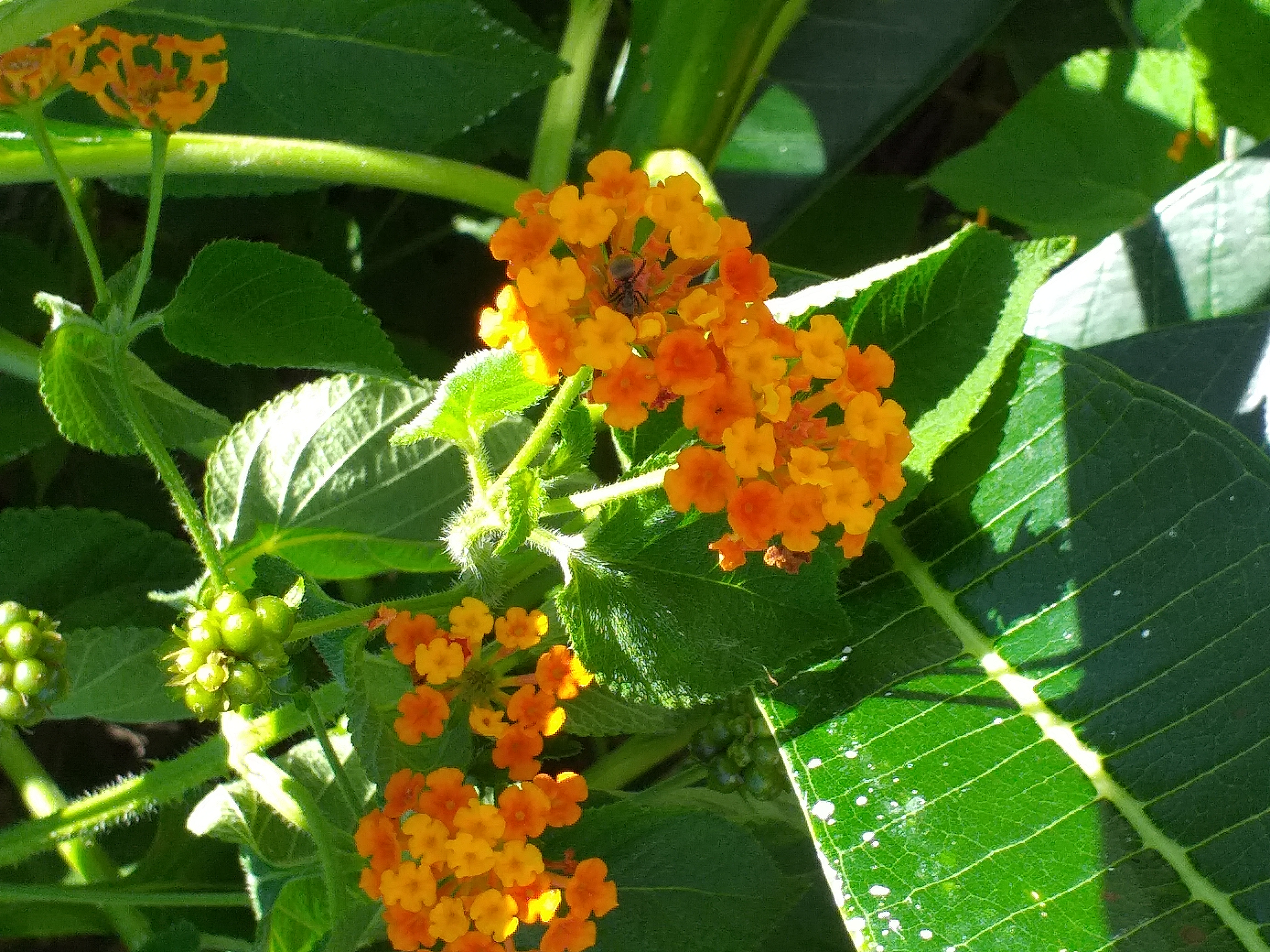 flower44.jpg