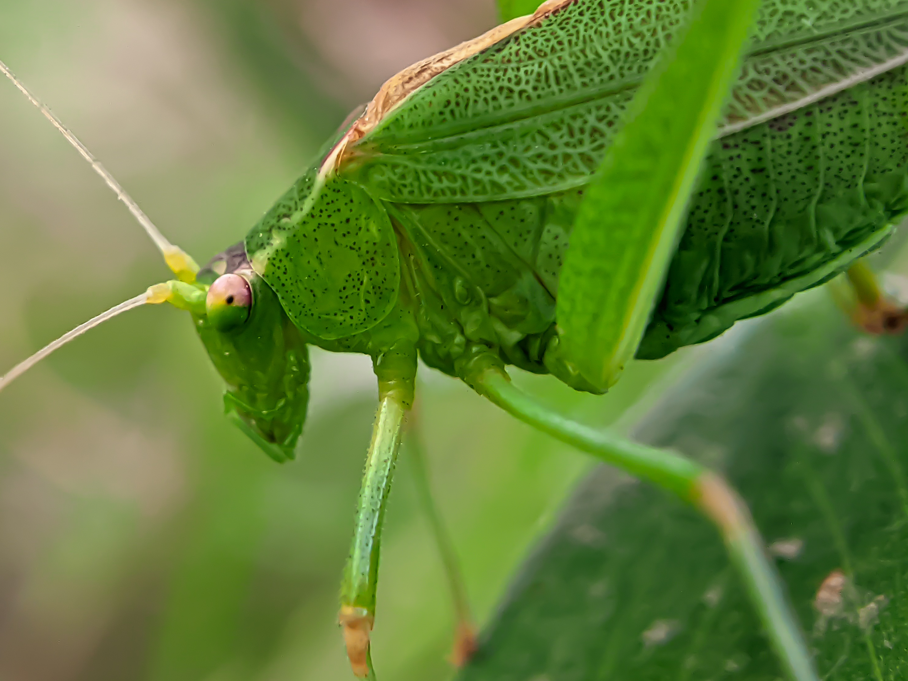 insects (8).jpg