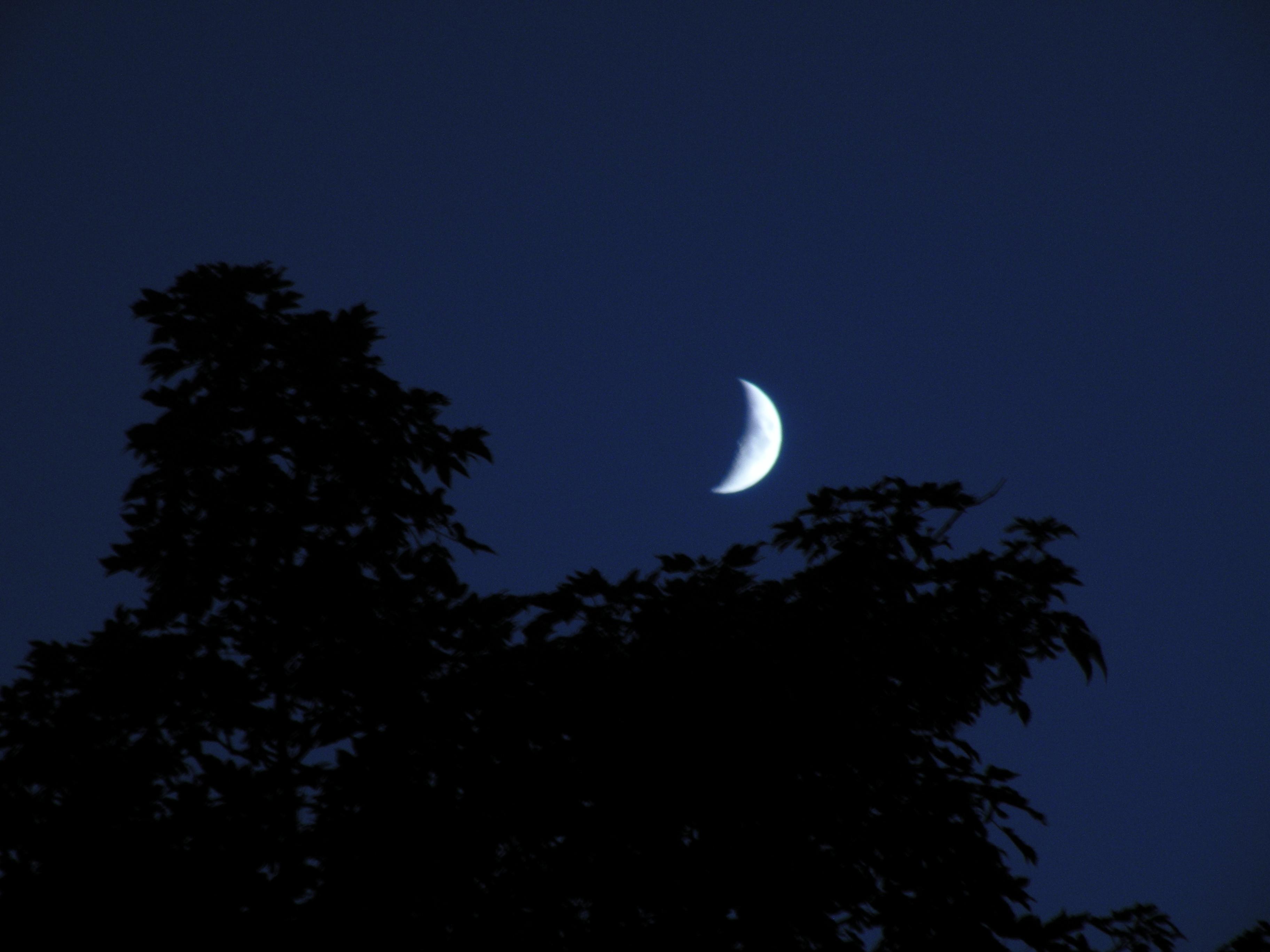 MoonTreeLarge.JPG