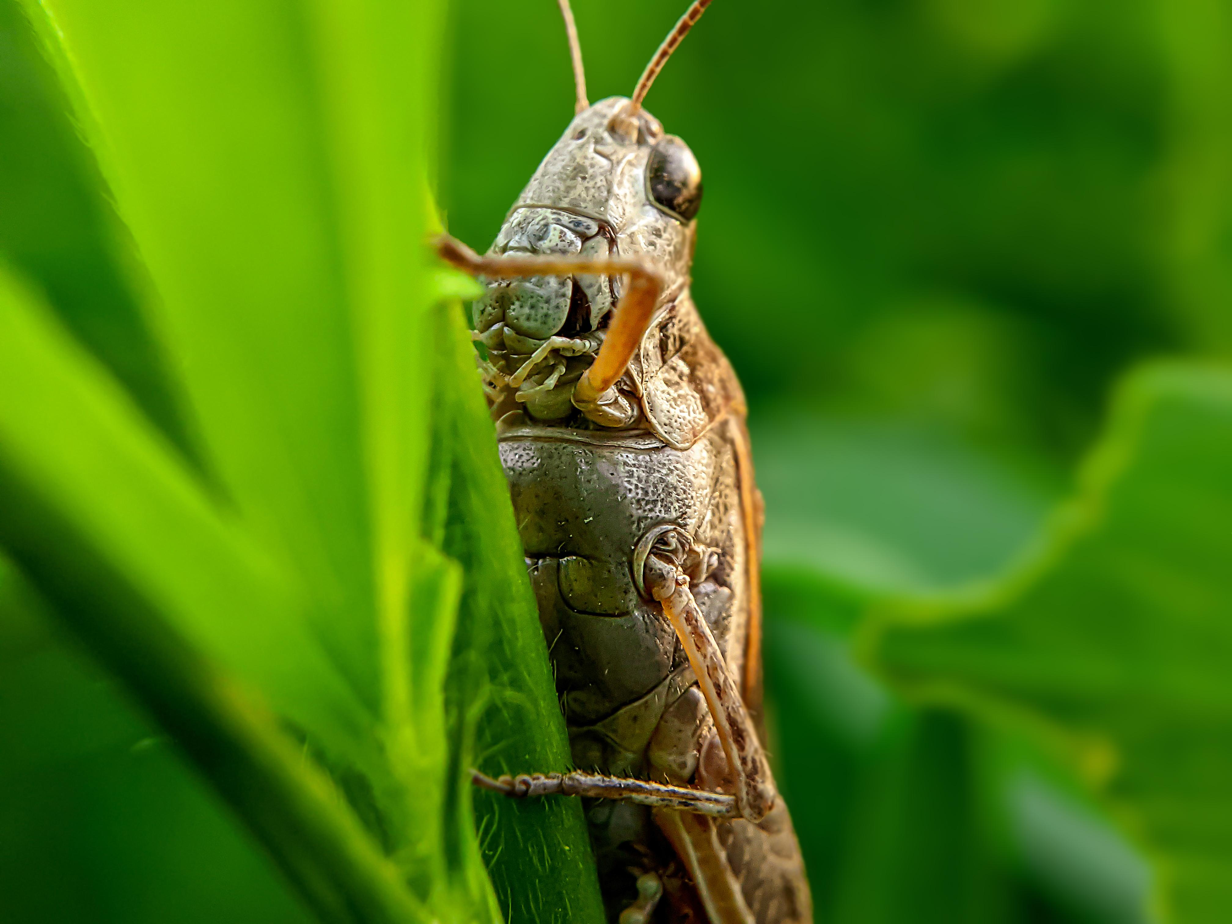 Grasshopper (8).jpg