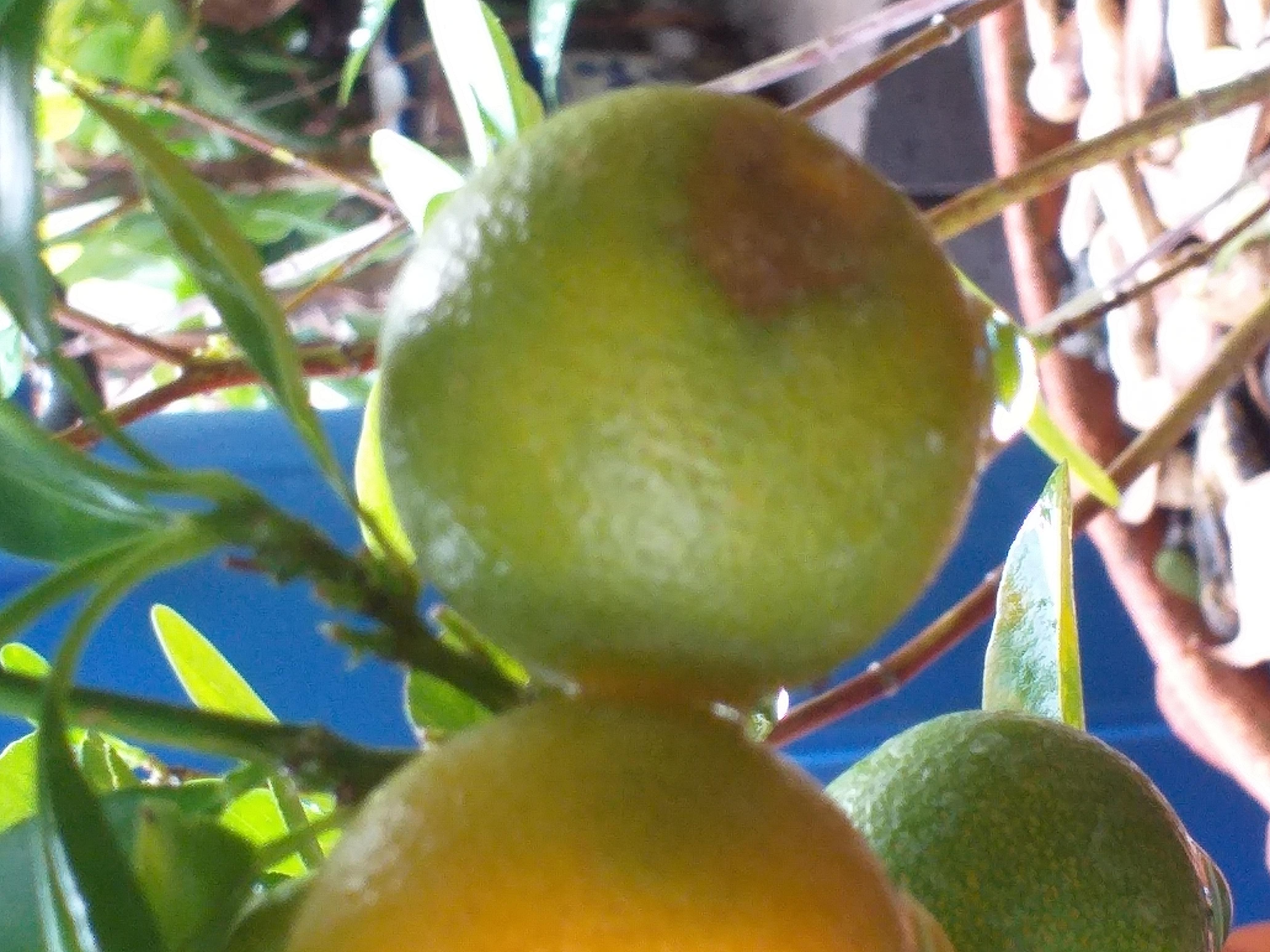 small orange1.jpg