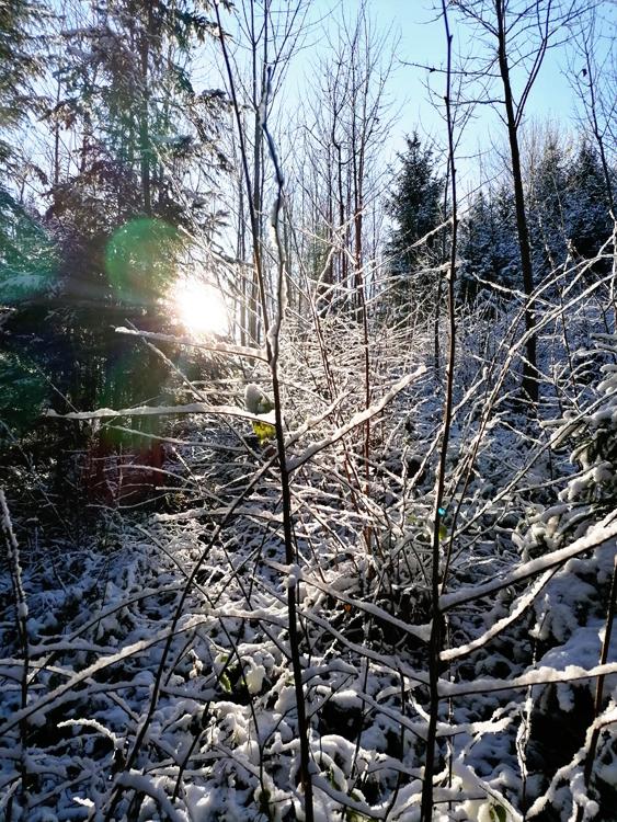 wood-snow-sun.jpg