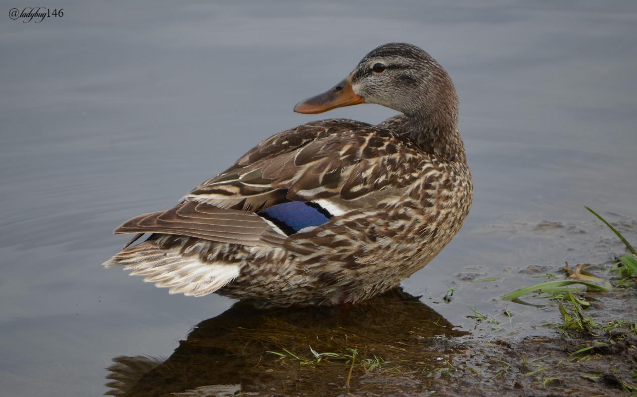 duck4.jpg