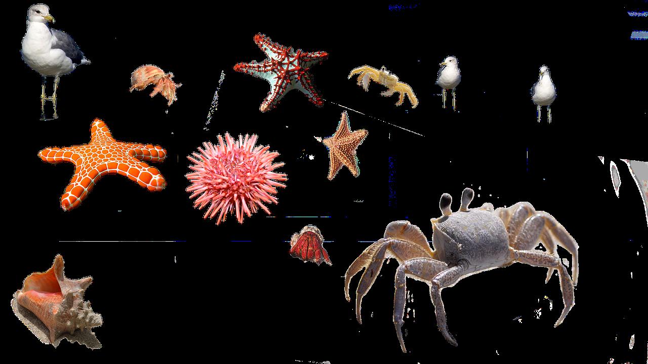 sea-urchin-666131_1280.png