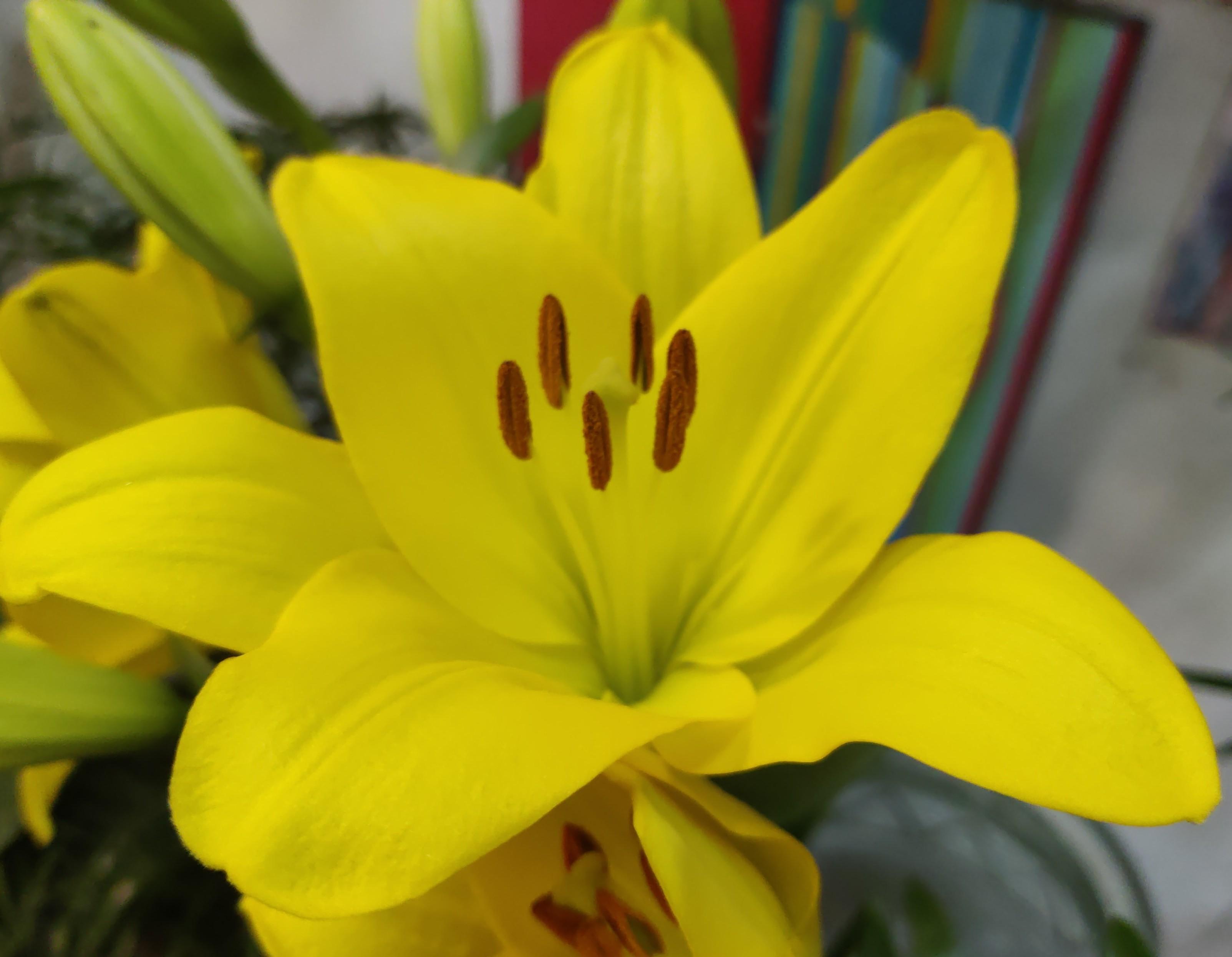 big.yellow.jpg