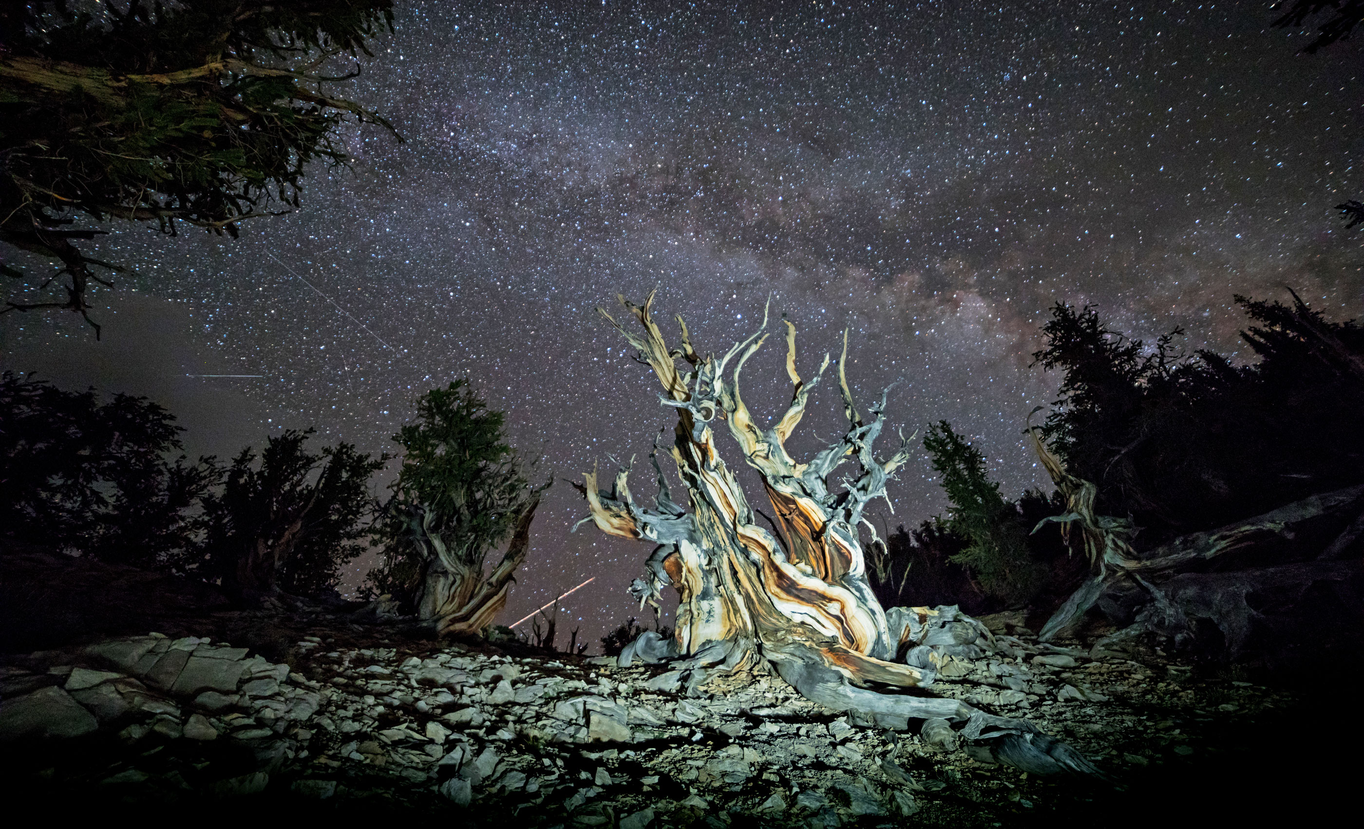 LightPainting-Gunnar-Heilmann_USA-California-tree-stars-Milkyway-Bristlecone-pine.jpg