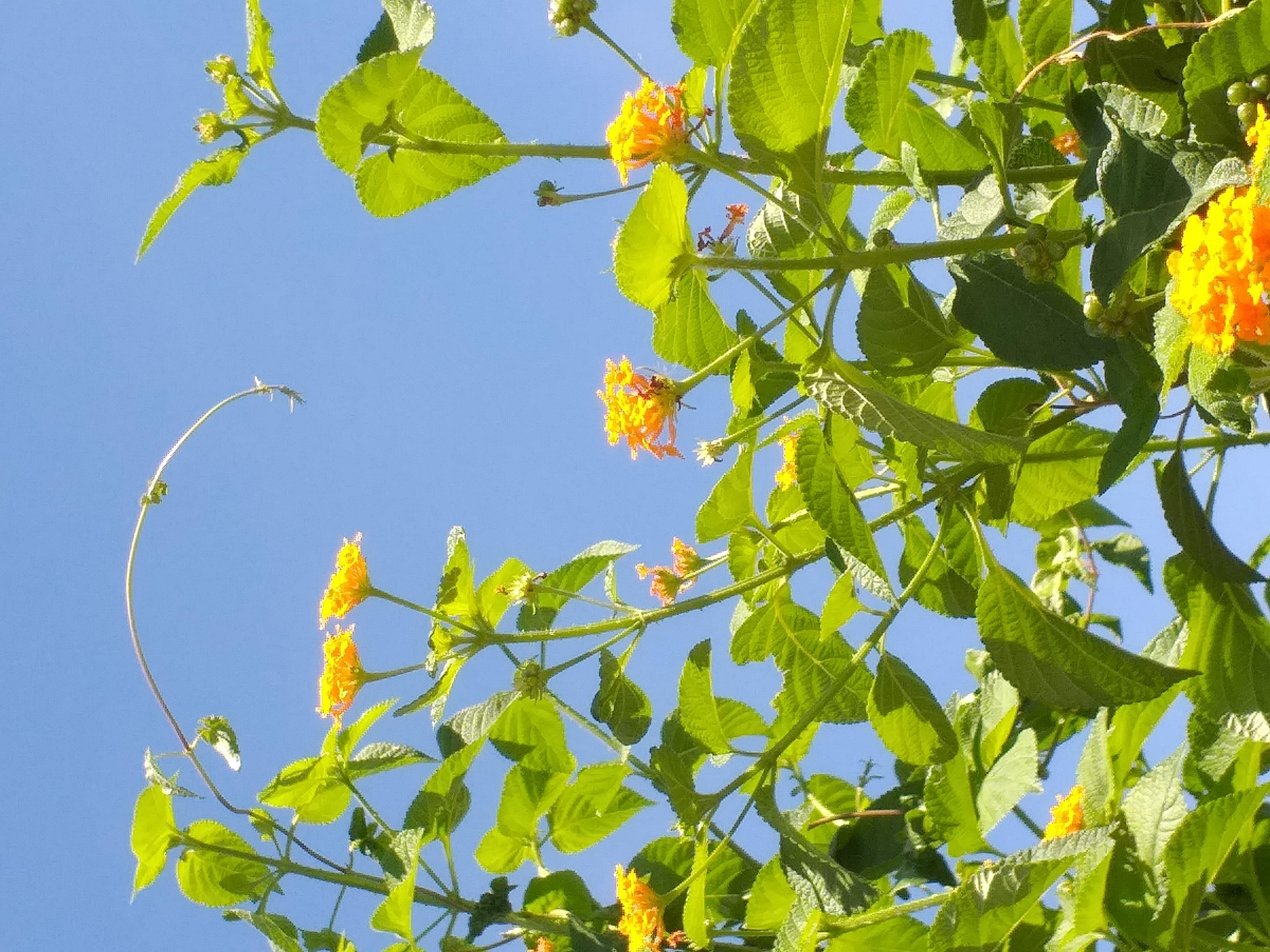 flower45.jpg