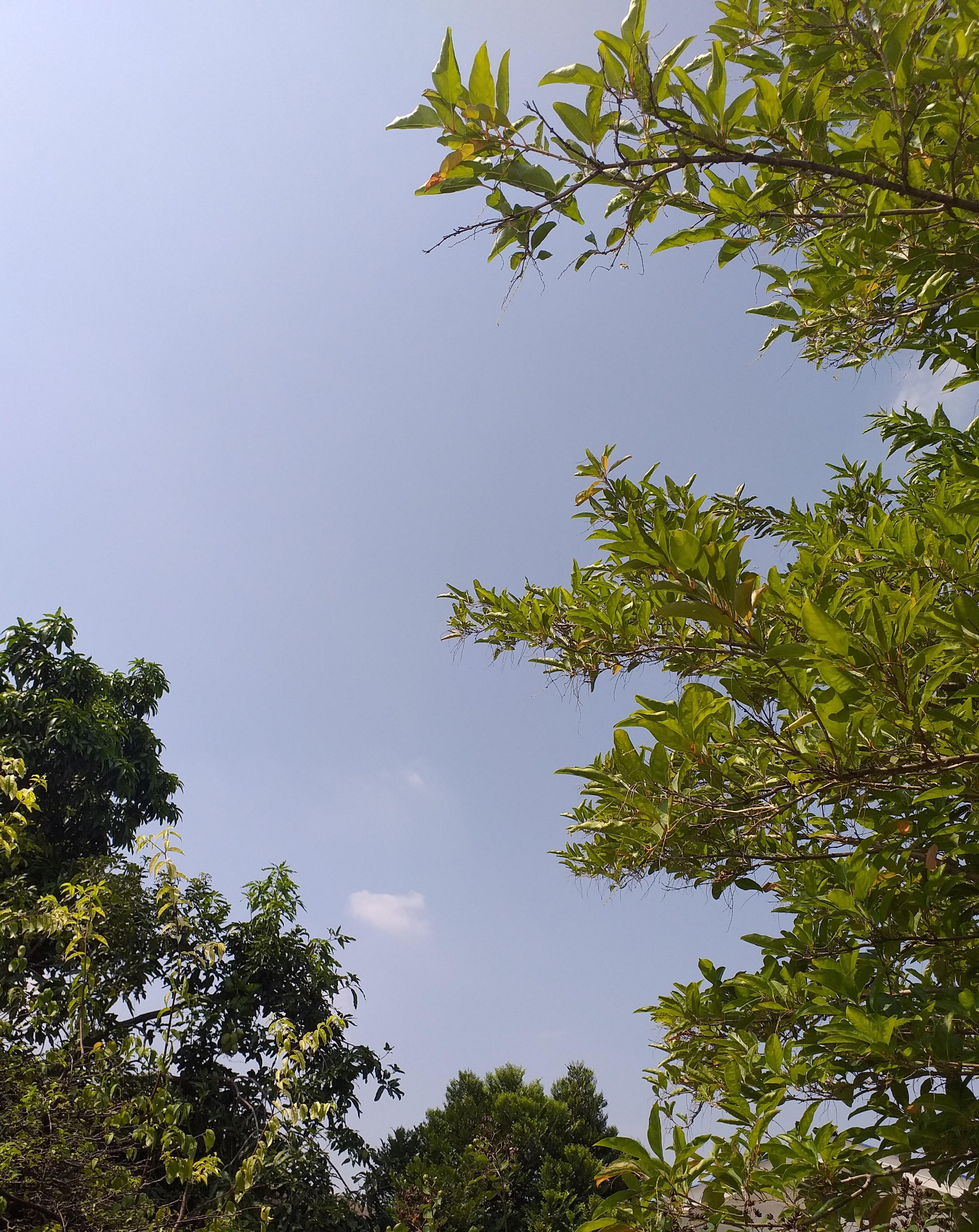 nature8.jpg