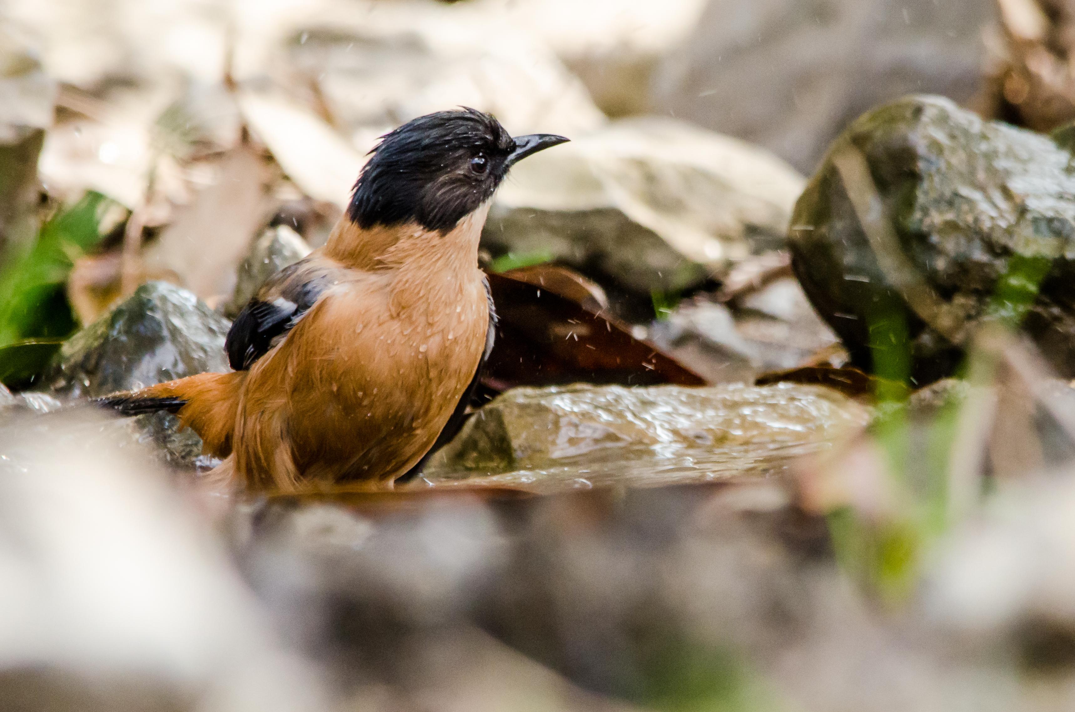 Bird 110.jpg