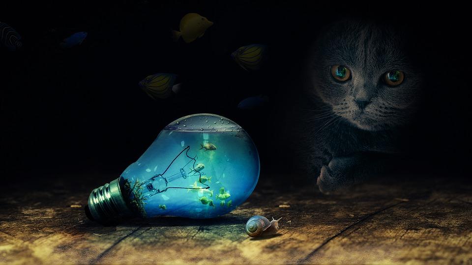 bulb-2352163_960_720.jpg
