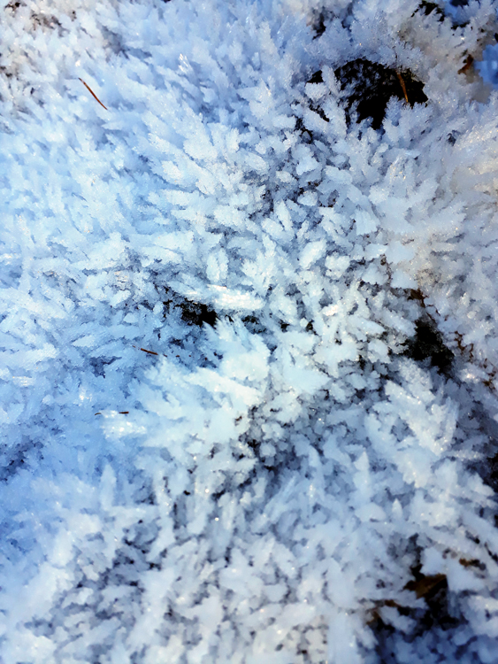 FROZEN-GRASS.jpg