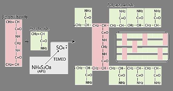 reaccion de poliacrilamida.png