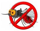 Mosquito+.jpg