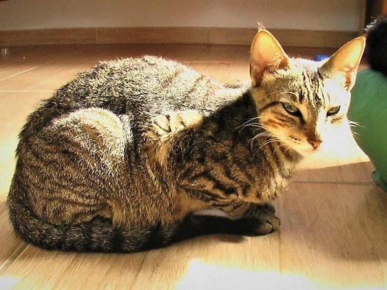 marycat2.jpeg