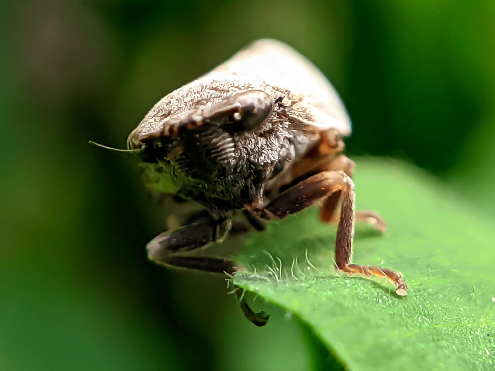 insects (9).jpg