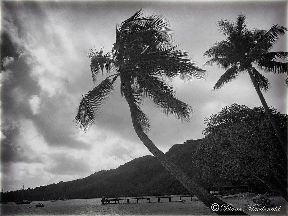 huahine beach view b&w.jpg