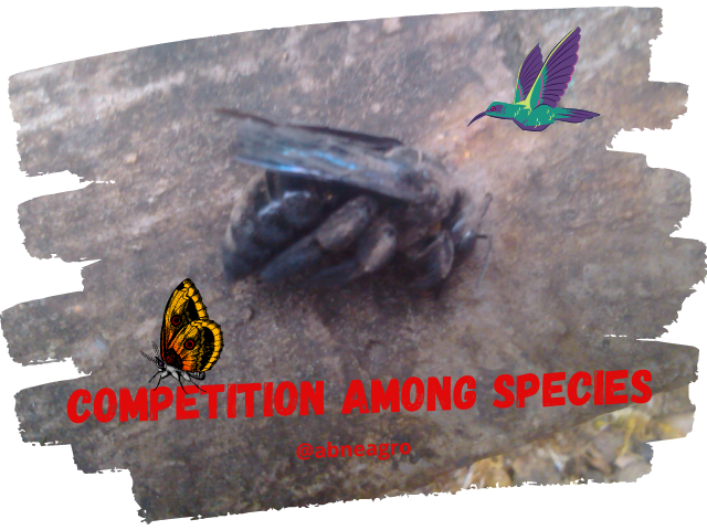 competition among species 1.png