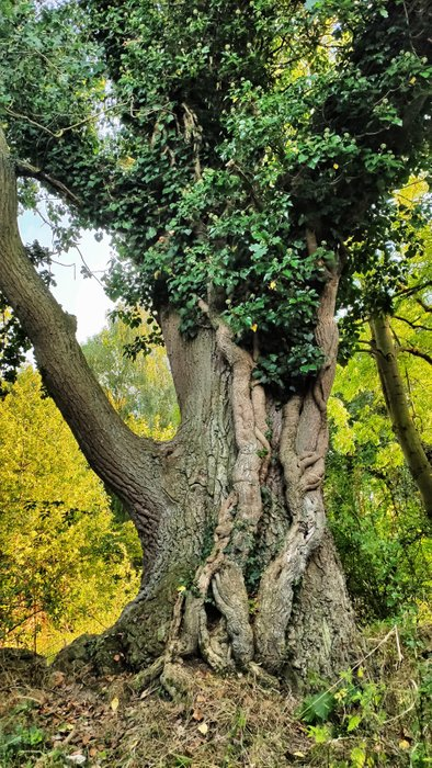 """What a wonderful tree - looks like the once from the movie """"Avatar"""""""