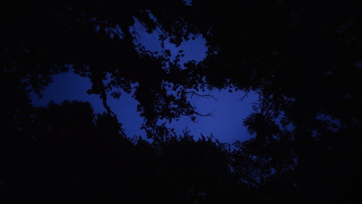 The dark sky is bright tonight.