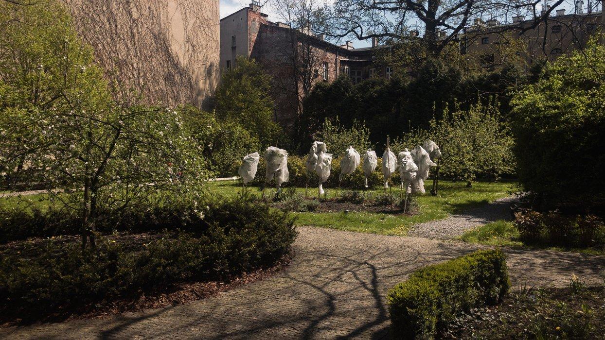 Ogród / The garden